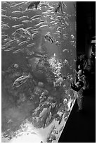 School of fish and children, Steinhart Aquarium, California Academy of Sciences. San Francisco, California, USA ( black and white)