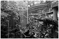 Four-story Rainforest exhibit, California Academy of Sciences. San Francisco, California, USA ( black and white)
