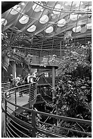 Tourists on spiraling path look at rainforest canopy, California Academy of Sciences. San Francisco, California, USA ( black and white)
