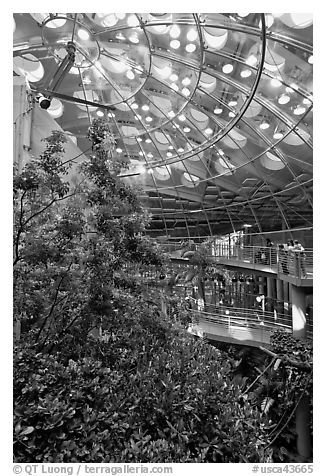 Domed rainforest, California Academy of Sciences. San Francisco, California, USA (black and white)
