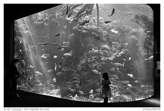 Girl looks at Northern California Aquarium, California Academy of Sciences. San Francisco, California, USA (black and white)