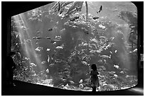 Girl looks at Northern California Aquarium, California Academy of Sciences. San Francisco, California, USA ( black and white)