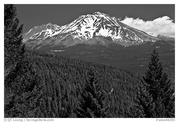 Forested slopes and Mount Shasta. California, USA (black and white)