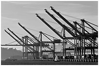 Giant cranes dwarf yacht Port of Oakland. Oakland, California, USA ( black and white)