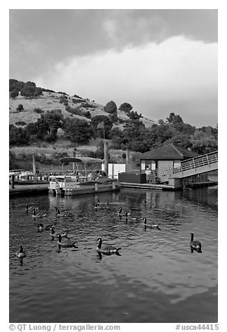Ducks and marina at sunset, Lake Chabot Regional Park. Oakland, California, USA (black and white)