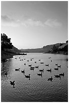 Lake Chabot with ducks at sunset, Castro Valley. Oakland, California, USA (black and white)