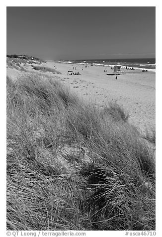 Dune grass, palm beach. Watsonville, California, USA (black and white)