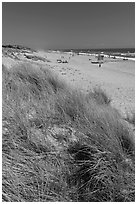 Dune grass, palm beach. Watsonville, California, USA ( black and white)