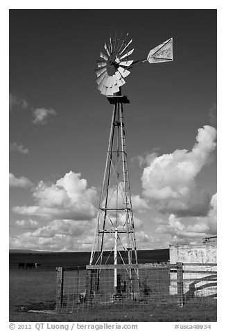 Windmill in pasture. California, USA (black and white)