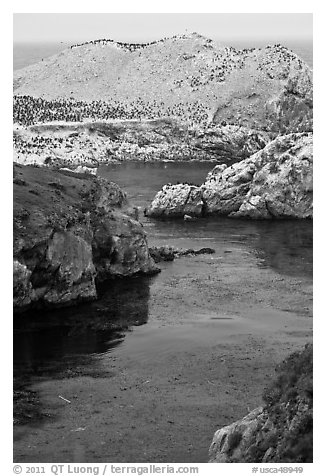 Rocks covered with seabirds. Point Lobos State Preserve, California, USA (black and white)