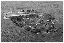 Marine mammals on islet. Point Lobos State Preserve, California, USA (black and white)