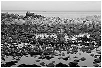 Seabirds and rocks at sunset. Pacific Grove, California, USA ( black and white)