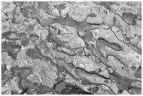 Conglomerate rock. Point Lobos State Preserve, California, USA (black and white)