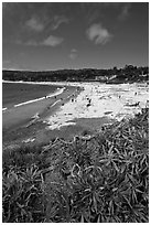 Carmel Beach with foreground of shrubs. Carmel-by-the-Sea, California, USA (black and white)