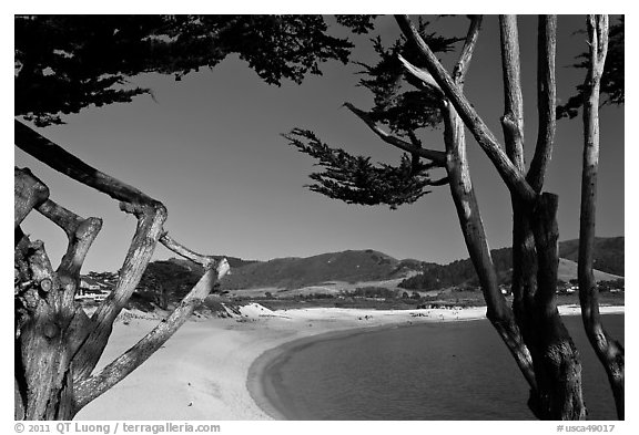 Black and white picture photo carmel river beach framed by cypress trees carmel by the sea california usa