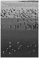 Birds, Carmel River State Beach. Carmel-by-the-Sea, California, USA (black and white)