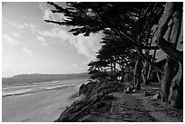Walkway and cypress on edge of Carmel Beach. Carmel-by-the-Sea, California, USA (black and white)
