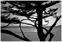 Cypress and ocean, late afternoon. Carmel-by-the-Sea, California, USA (black and white)