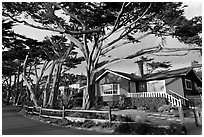 Residential homes and cypress trees. Carmel-by-the-Sea, California, USA (black and white)