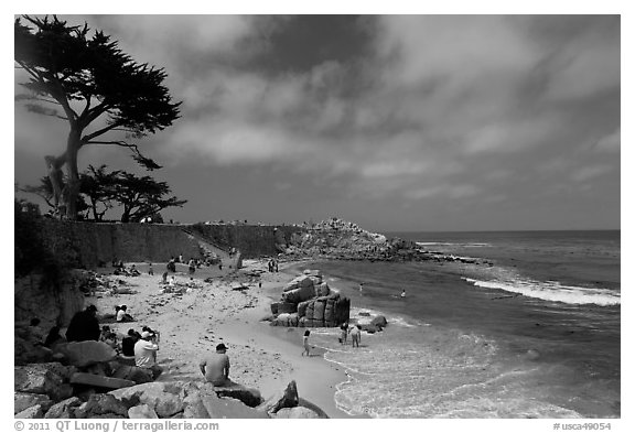 Cypress and beach, Lovers Point Park. Pacific Grove, California, USA (black and white)