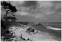 Cypress and beach, Lovers Point Park. Pacific Grove, California, USA ( black and white)