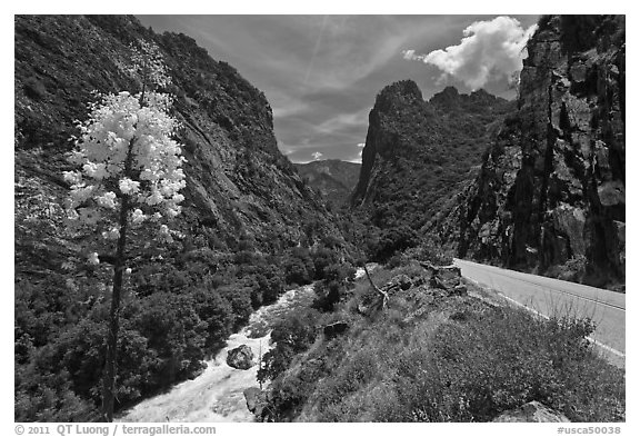 Yucca, river, and road in Kings Canyon, Giant Sequoia National Monument near Kings Canyon National Park. California, USA (black and white)