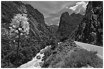 Yucca, river, and road in Kings Canyon, Giant Sequoia National Monument near Kings Canyon National Park. California, USA ( black and white)