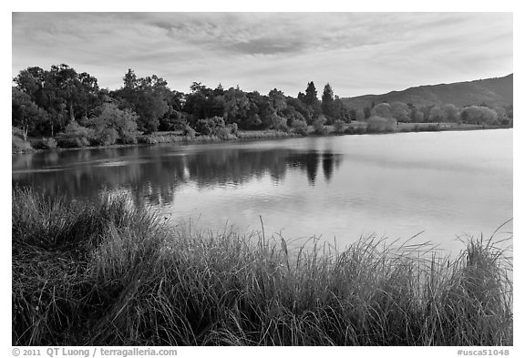 Reeds and lake, Vasona Lake County Park, Los Gatos. California, USA (black and white)