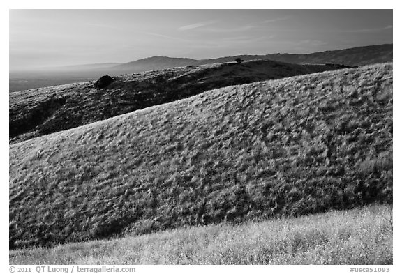 Hills, Santa Teresa County Park. San Jose, California, USA (black and white)