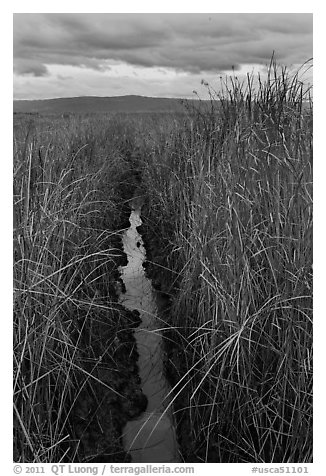 Narrow creek and tall grasses, Alviso. San Jose, California, USA (black and white)