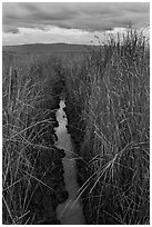 Narrow creek and tall grasses, Alviso. San Jose, California, USA ( black and white)