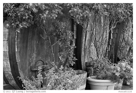 Barells and flowers, Savannah-Chanelle Vineyards, Santa Cruz Mountains. California, USA (black and white)