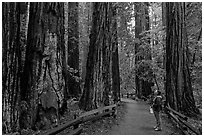 Woman looking at tall redwood trees. Muir Woods National Monument, California, USA (black and white)