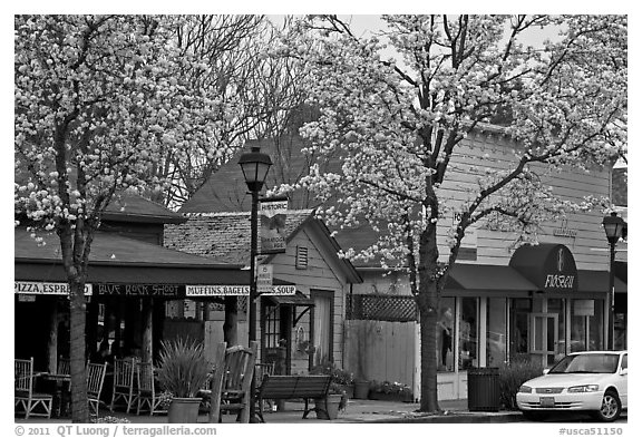 Main street in spring. Saragota,  California, USA (black and white)