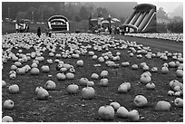 Pumpkin patch and slides. Half Moon Bay, California, USA (black and white)