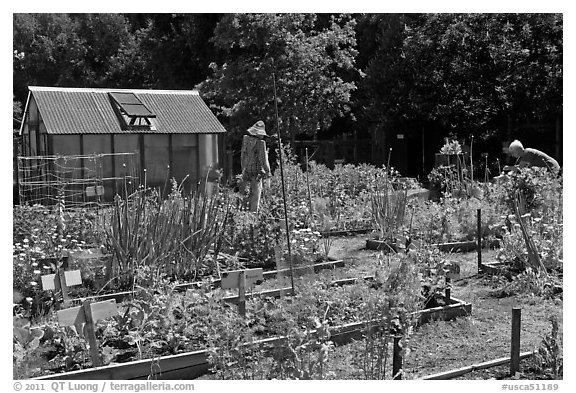 Vegetable Garden, Rancho San Antonio Open Space, Los Altos. California, USA (black and white)