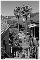 Park and Bay seen from stairs, Sausalito. California, USA (black and white)