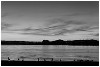 Ducks at sunset, Robert W Crown Memorial State Beach. Alameda, California, USA (black and white)