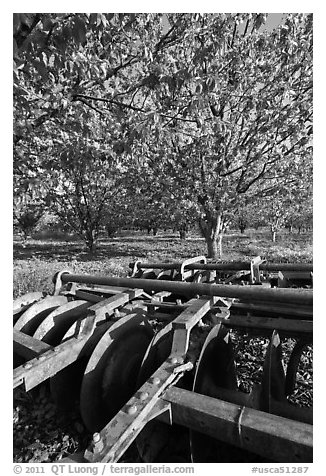 Plower and orchard, Sunnyvale. California, USA (black and white)