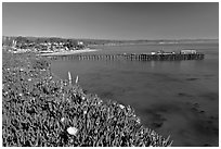 Iceplant-coverd buff and pier. Capitola, California, USA (black and white)
