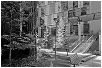 Redwood trees and modern building, UCSC. Santa Cruz, California, USA (black and white)