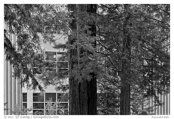 Redwood trees and campus buidling, University of California. Santa Cruz, California, USA (black and white)