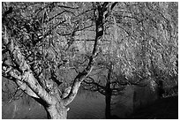 Pond and willows in autumn, Ed Levin County Park. California, USA (black and white)