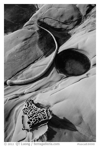 Taffoni and kelp, Bean Hollow State Beach. San Mateo County, California, USA (black and white)