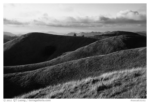 Hills, Mt Tamalpais State Park. California, USA (black and white)