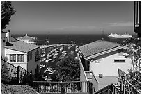 Stairs between residences overlooking harbor, Avalon, Catalina. California, USA (black and white)