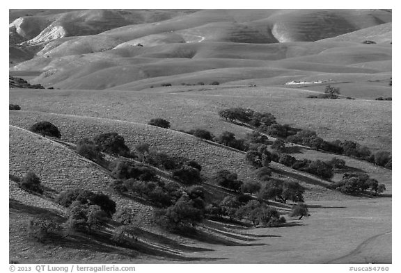 Gentle hills and trees near King City. California, USA (black and white)