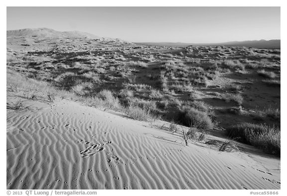 Sand ripples on Kelso Dunes, early morning. Mojave National Preserve, California, USA (black and white)