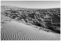 Sand ripples on Kelso Dunes, early morning. Mojave National Preserve, California, USA ( black and white)