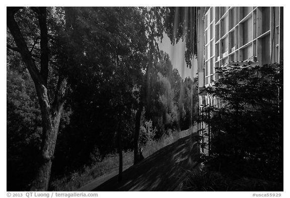 Forest decor and potted plant, Paramount Pictures Studios. Hollywood, Los Angeles, California, USA (black and white)